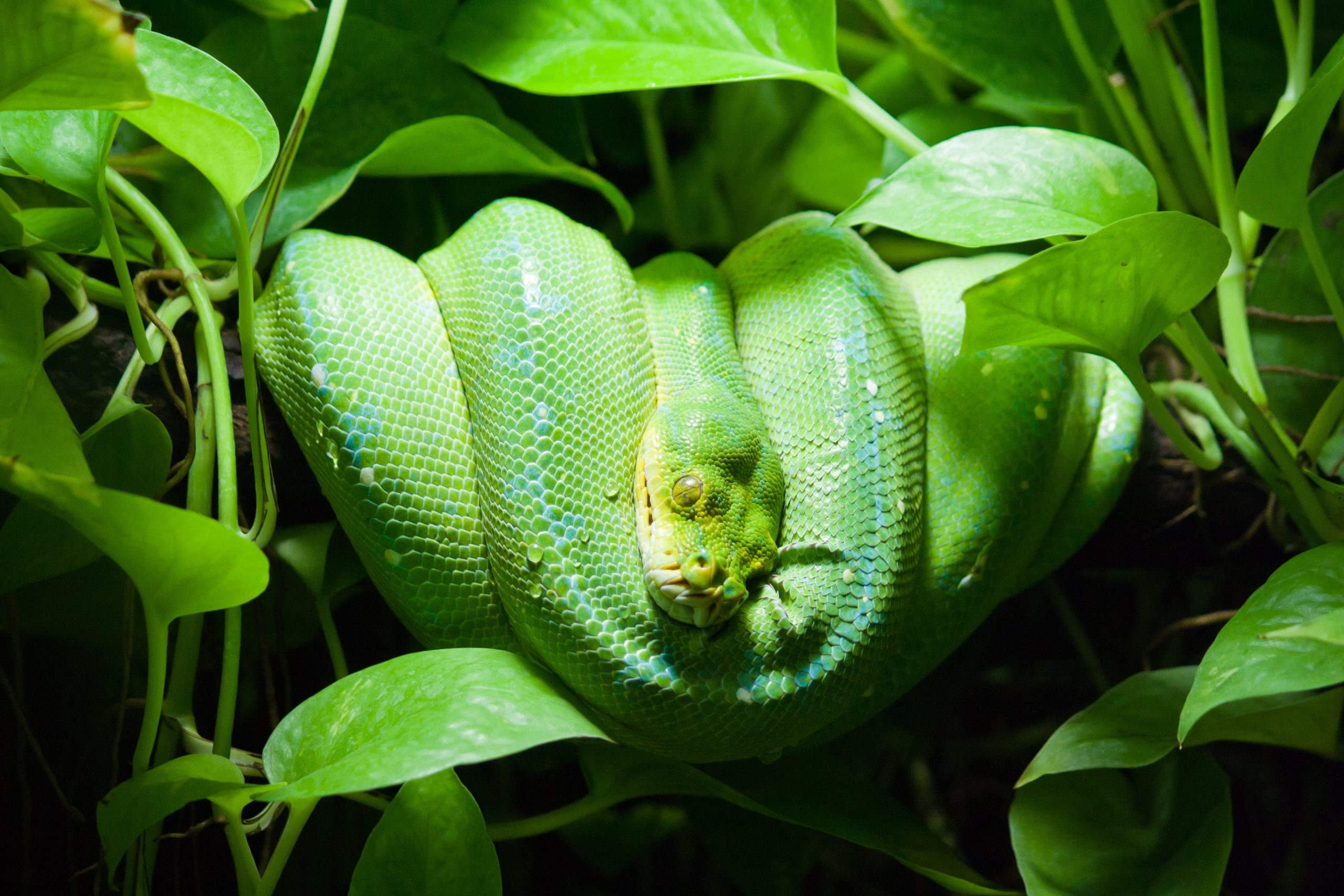 All You Want To Know About Grass Snake