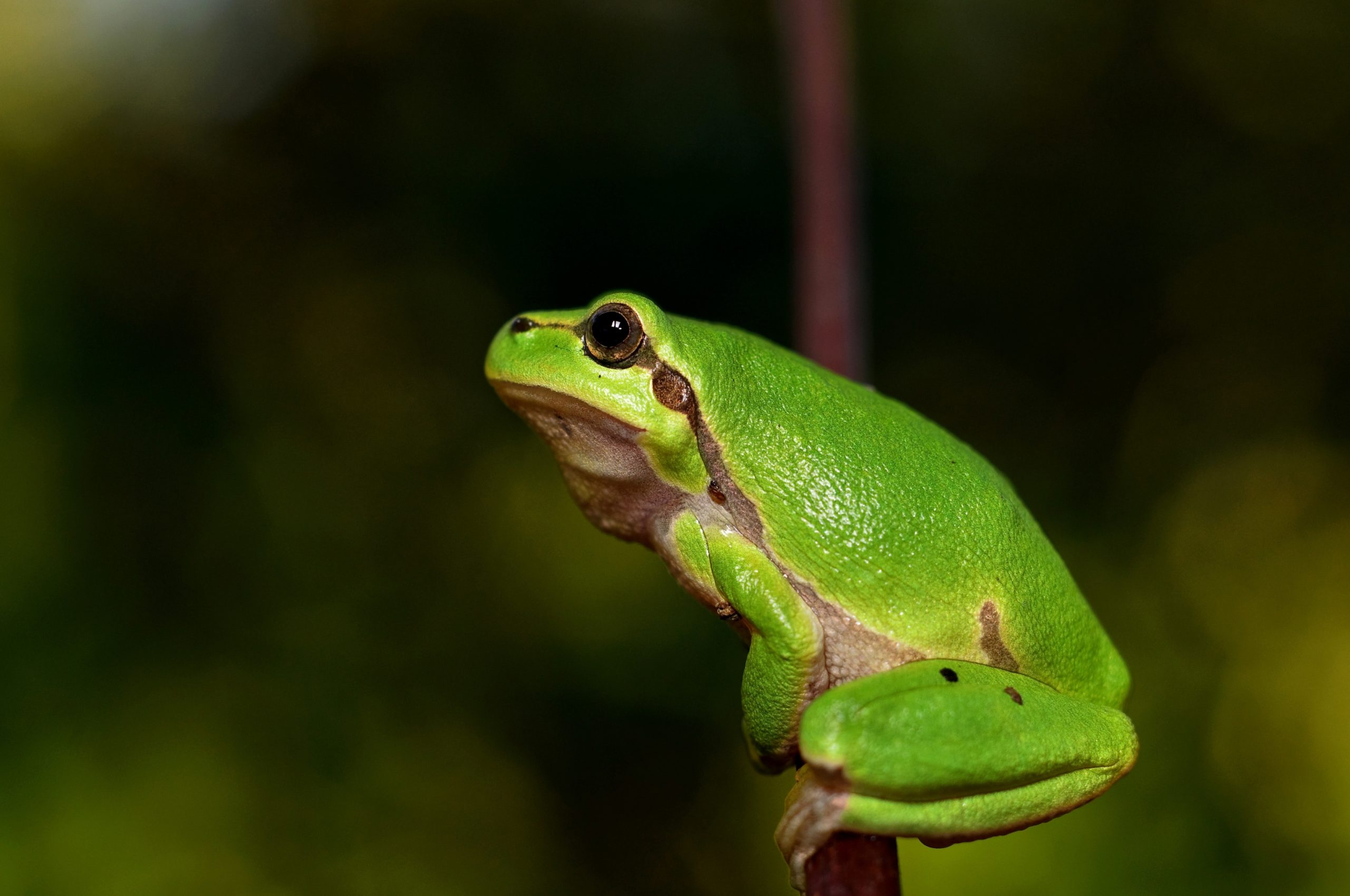 Frogs - The Leaping Amphibians