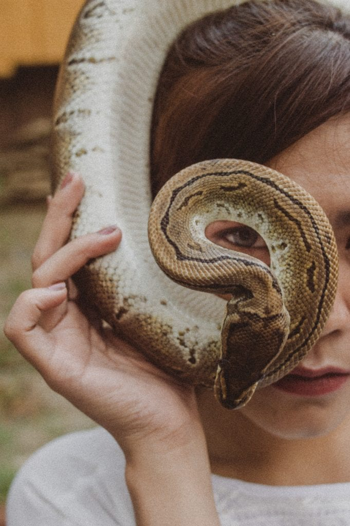 What Are The Friendly Snakes And How They Behave?