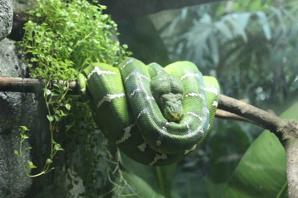 Grass Snake - Why Are They Significant?