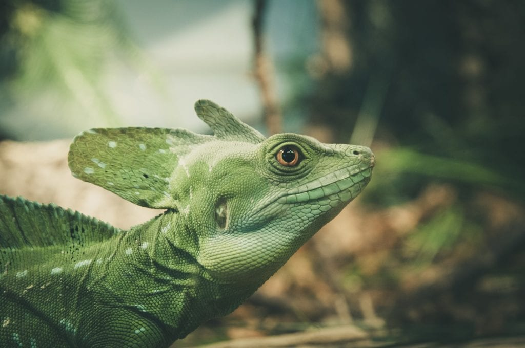 Get Your Pet Game Right With Lizard And Turtle