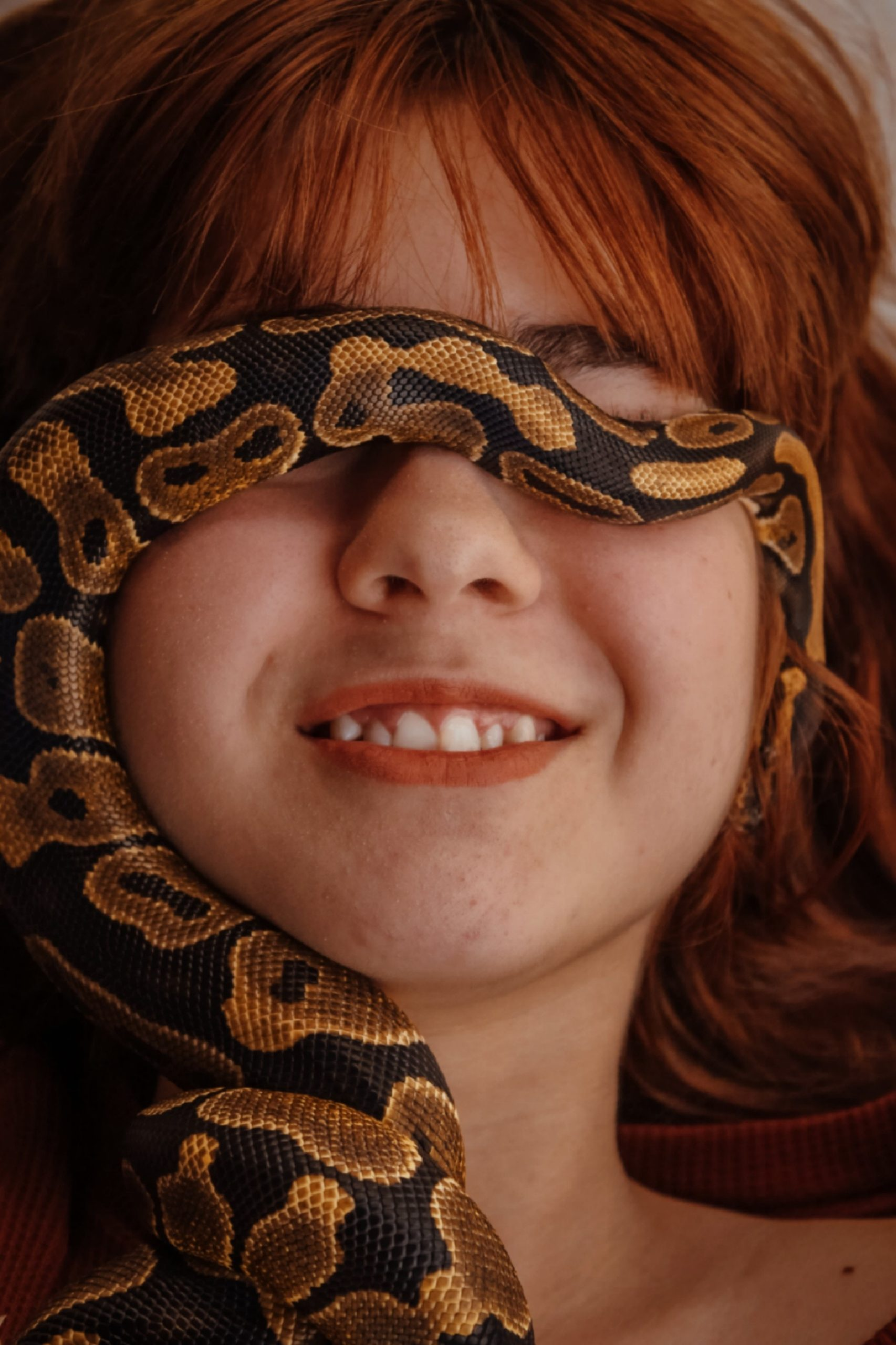 3 Musts Before You Keep Reptiles As Pets